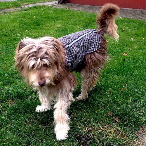 dog-raincoat-diy-8